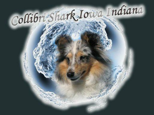 fotomon_chov_collibri_shark_iowa_indiana.jpg